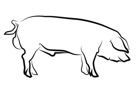 swine: Pig silhouette isolated on white