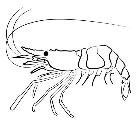 Silueta del camarón aislados en blanco