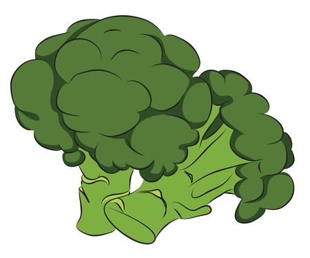 brassica: Fresh Broccoli isolated on white