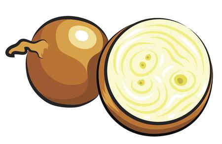 unpeeled: Fresh Onion isolated on white  Illustration