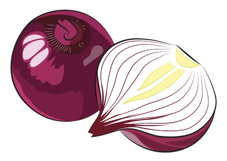 白で隔離赤タマネギ  イラスト・ベクター素材