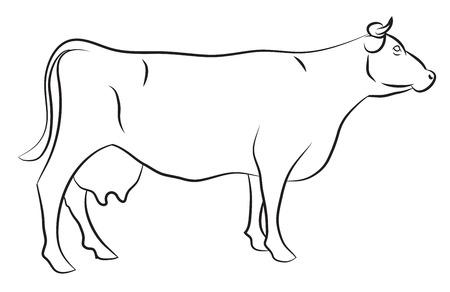 白で隔離される牛のスケッチ