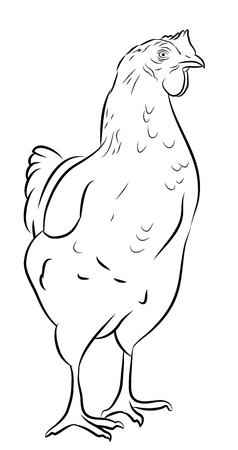 Sketch of a Hen isolated on white