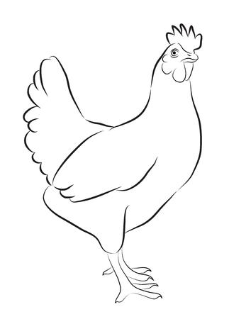 白で隔離される鶏のスケッチ