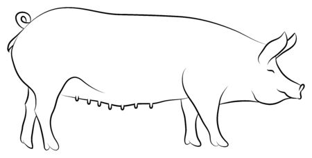 sow: Sketch of a Sow isolated on white