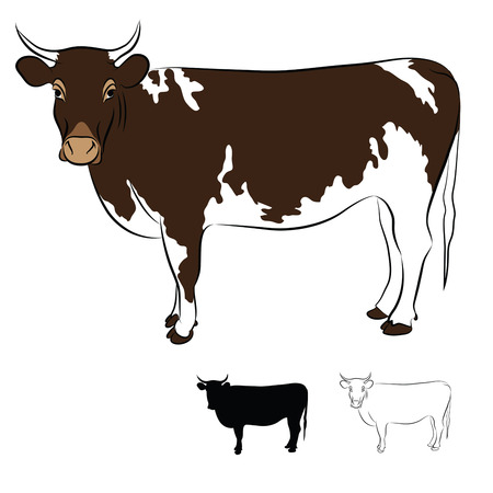Cow Brown and White Coated Silhouette, Contour, Shadowing