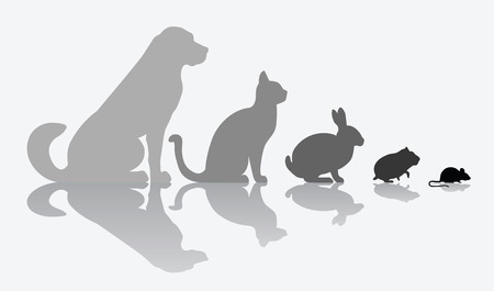 companions: Dog, cat, rabbit, hamster and mouse composition isolated on white