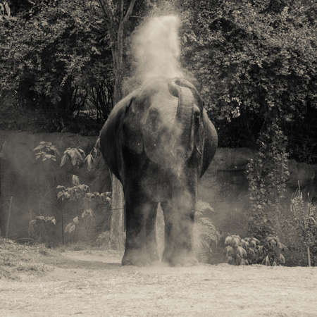A Baby Elephant Plays in a Zoo