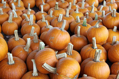 ornage: Small ornage pumpkins for sale at farmers market.