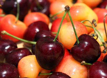 Red and white cherries focus on two red cherries connected by stems. Stock Photo - 9764502