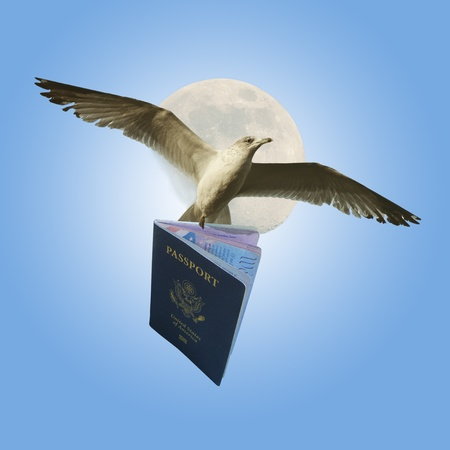 Flying With American Passport photo