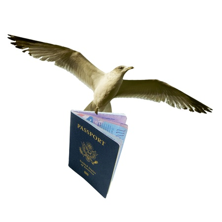 Isolated Bird With American Passport