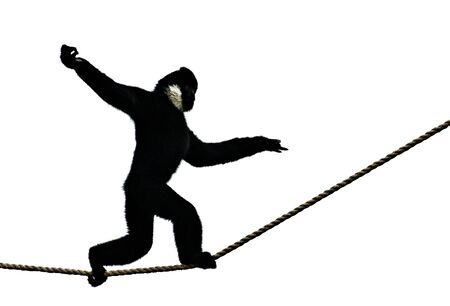 maneuver: Semi-Silhouetted Monkey Walking on Rope