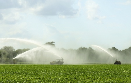 irrigate: Irrigation of Agricultural Field Stock Photo