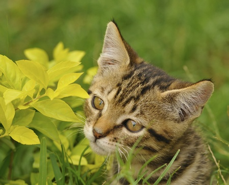 hunter playful: Cute Kitten Hiding Behind Plants Stock Photo