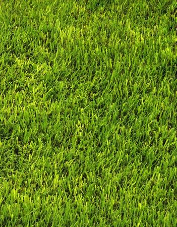 Go Green Grass Background