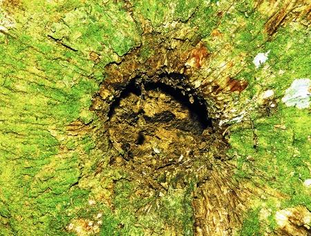 cortex: Tree Cortex Background