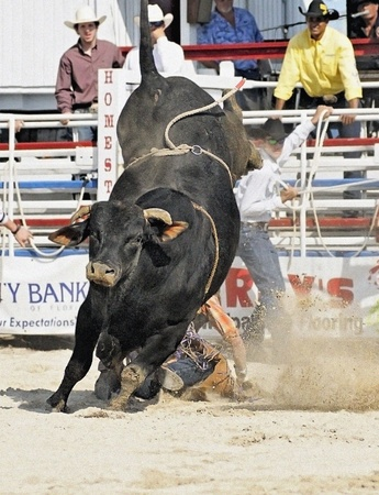 HOMESTEAD, FL - JANUARY 25 Bull Riding at DeMilly Rodeo Arena January 25, 2009 in Homestead, FL.