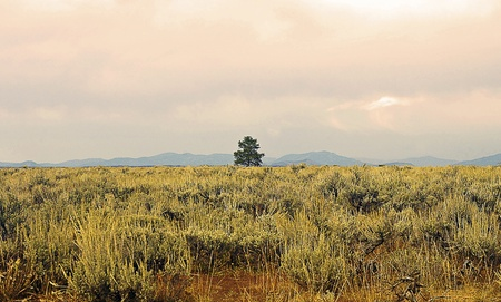 Single Tree in a Deforested Arid Land photo