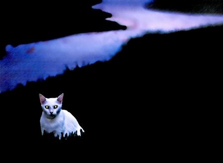 suspenso: Gato blanco misterioso por el Canal Foto de archivo