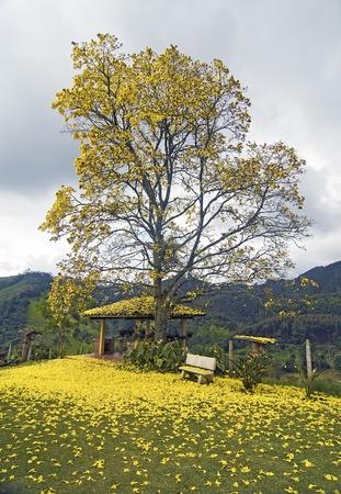 acacia tree: Acacia Tree by the Mountains Scene Stock Photo