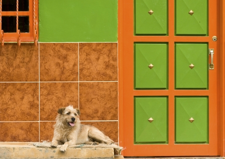 Dog Resting by Colorful Wall Stock Photo - 14177823