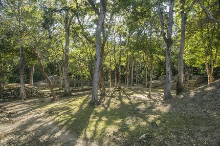 Trees reclaiming the archaeological Maya site of Copan, Honduras Banco de Imagens
