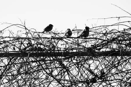 3 Birds Zdjęcie Seryjne