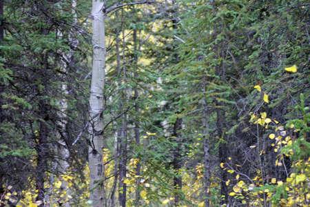 Alaska Brush Фото со стока