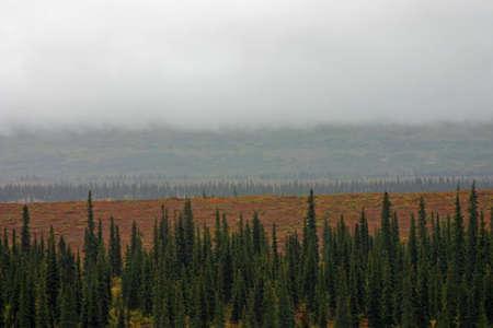 Fog on Tundra Stock Photo