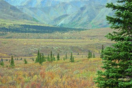tundra: Lush Tundra