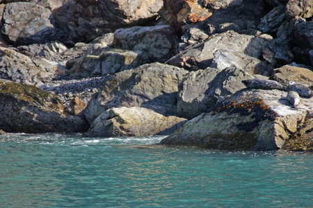 Resting on Rocks photo