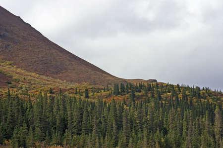 Forest to Mountain Фото со стока