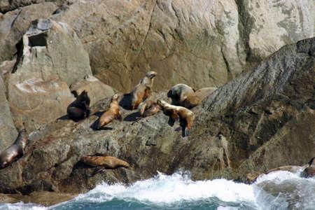 Seward Sea Lions Фото со стока