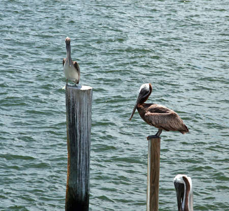 Sea Birds2 photo