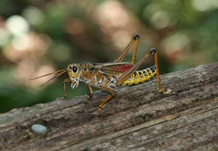 Grasshopper3 photo