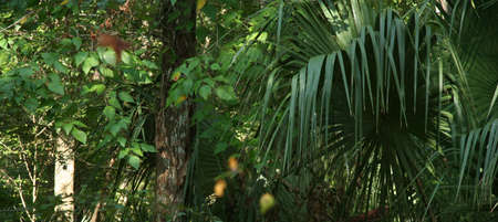 bark palm tree: Forested
