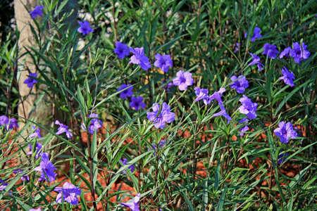 Flowers Stock Photo - 1526710