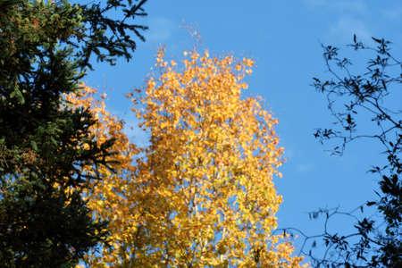 Fall Tree photo