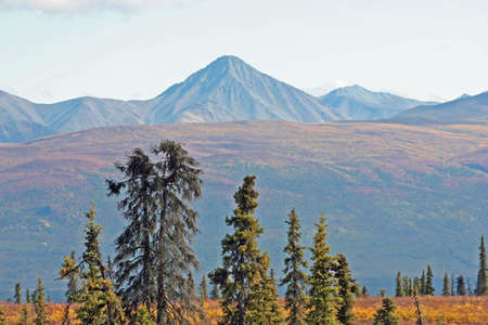 Mountains and Trees in Alaska photo