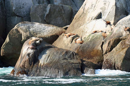 Seals on Rocks photo