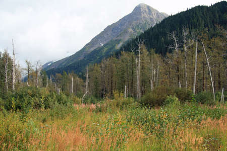 Alaska Stock Photo - 1806161