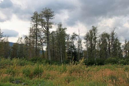 Trees Line Alaska photo