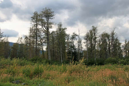Trees Line Alaska Stock Photo - 1806162