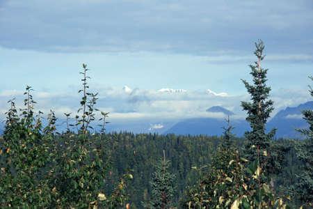 Alaska Tree line photo