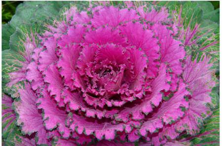Alaska Flower photo