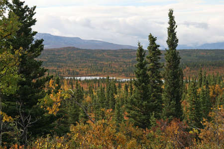 Scene of Alaska Land Stock Photo - 1806348