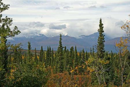 Alaska Forest photo