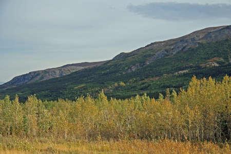 Alaska Foliage photo