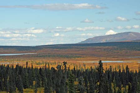 Alaskan Landscape Stock Photo - 2453325